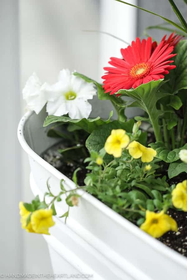 How to plant the perfect spring flower pots for your front porch
