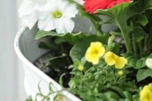 How To Plant The Perfect Flower Pot